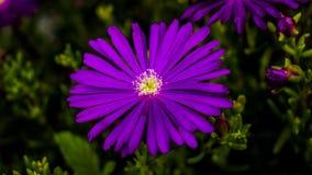 Macro immagini dei fiori Fotografia Stock Libera da Diritti