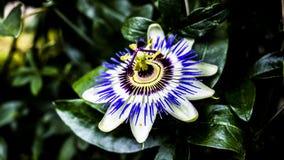 Macro immagini dei fiori fotografia stock