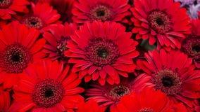 Macro immagini dei fiori Immagini Stock