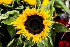 Macro immagini dei fiori Fotografie Stock Libere da Diritti