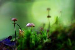 Macro inedible mushrooms Stock Image