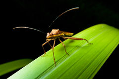 Macro of insect Stock Image
