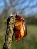 Macro insect Royalty-vrije Stock Afbeeldingen