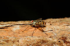 Macro insect brown fly on tree Stock Image