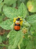 Macro insecte photos stock