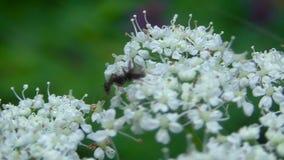 Macro insectes dans leur habitat naturel clips vidéos