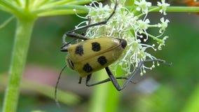Macro insectes dans leur habitat naturel banque de vidéos