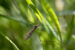 Macro insects resting on plants, eating and then flying away on a sunny day. stock photo