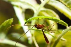 Macro insetto su una foglia verde Immagini Stock