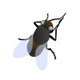 Macro isolata della mosca Fotografie Stock Libere da Diritti