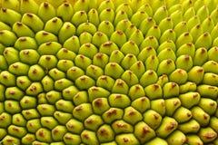 Macro jack fruit skin texture, Royalty Free Stock Photos