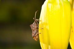Macro jardin d'insecte d'insecte Photographie stock