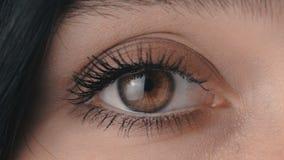 Macro lampeggiamento dell'occhio del ` s della donna di Brown del primo piano di bellezza video d archivio