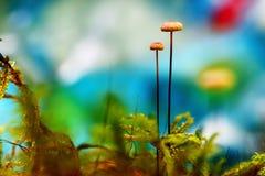 Macro landscape mushrooms Royalty Free Stock Photography
