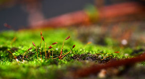 Macro Landscape Royalty Free Stock Photo