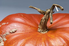 Macro landscape, stem with tree shape, skin, pumpkin, orange, Royalty Free Stock Photos