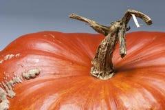 Macro landscape, stem with tree shape, skin, pumpkin, orange,. Closeup on a ripe orange pumpkin stem in tree shaped. Shooting studio after harvest in autumn Royalty Free Stock Photos