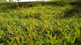 Macro Lanscape dell'erba verde Fotografia Stock