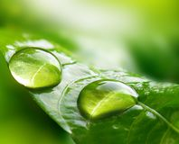 Macro Large raindrops on a leaf in tropical forest. royalty free stock photos