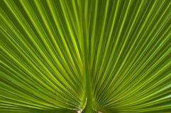 Macro of a leaf stock photo