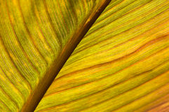 Macro of a leaf Stock Photography