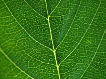 Macro Leaf Stock Photography
