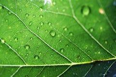 Macro Leaf Royalty Free Stock Photos