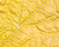 Macro of leaf . Royalty Free Stock Images