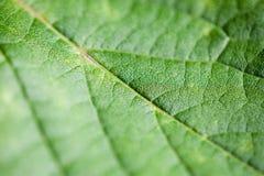 Macro leaf. Narrow depth of field macro leaf photography Royalty Free Stock Images