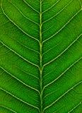Macro leaf Stock Images