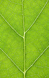 Macro of a Leaf Royalty Free Stock Photography