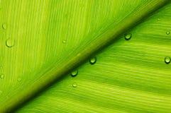 Macro leaf. Macro with beautiful green leaf Stock Photo