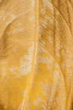 Macro leaf bacgkround Royalty Free Stock Image