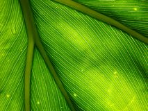 Macro Leaf Background 2 Stock Image