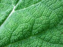 Macro leaf background Stock Photos