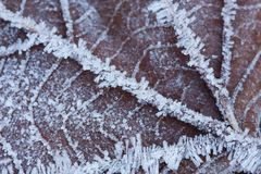 A macro of a frozen leaf Stock Photo