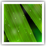 Macro Leaf with droplets. Vector illustration Stock Images