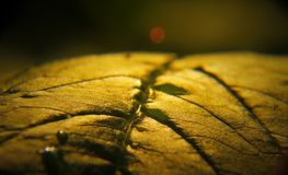 This is a macro of a leaf.  stock photography