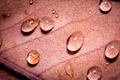 Macro leaf. Rain drops on an red autumn leaves Royalty Free Stock Photo