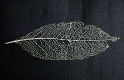 Macro  of leaf skeleton Royalty Free Stock Photos