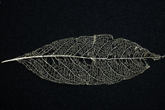 Macro  of leaf skeleton Royalty Free Stock Images