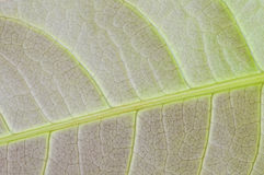 Macro leaf texture royalty free stock photography