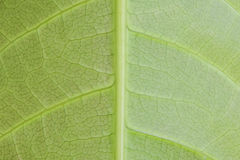 Macro leaf texture stock image