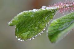 Macro Leaf water drop Stock Photo