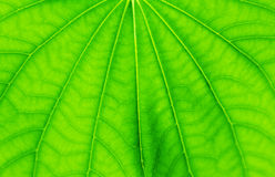 Macro leaves background texture. Stock Photos