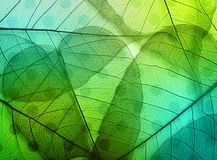 Macro leaves background texture Stock Photography
