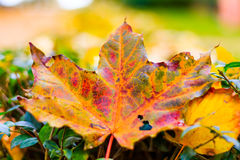 Macro leaves background texture, rainbow colours, soft focus, shallow depth of field.  Royalty Free Stock Photo