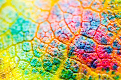 Macro leaves background texture, rainbow colours, soft focus, shallow depth of field Royalty Free Stock Images