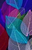 Macro leaves seamless background texture Stock Photo