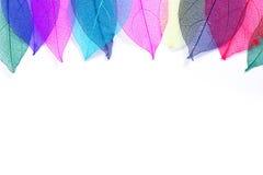 Macro leaves seamless background texture Royalty Free Stock Photos
